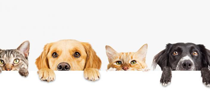 Decorative image of dogs and cats
