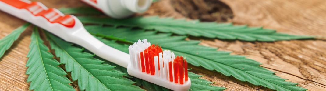Toothbrush and toothpaste beside a cannabis leaf